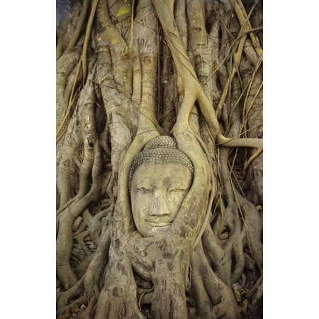 Thailand Ayuthaya Close up Of Stone Buddha Head With Tree Roots Growing Over It Wat Mahathat Stretched Canvas - Richard Maschmeyer  Design Pics (22 x