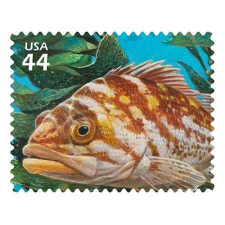 Copper Rockfish Poster Print By  Us Postal Service