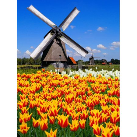 Dutch Windmills and Tulips Print Wall Art By Jeni Foto (Foto Polarisiert)