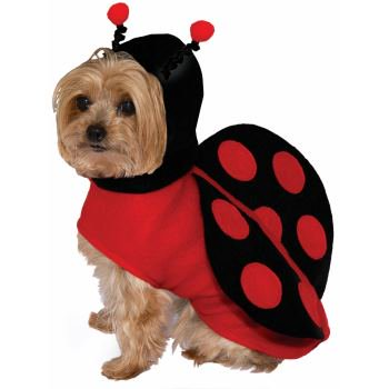 PET COSTUME-LADY BUG-MEDIUM