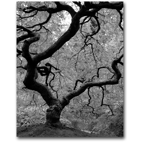 "Trademark Art ""Japanese Tree II"" Canvas Wall Art by David Farley"