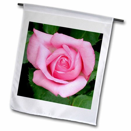 3dRose Pink Rose - Garden Flag, 12 by 18-inch