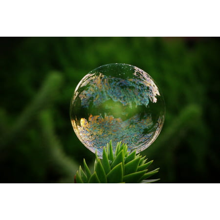 Canvas Print Tree Float Shimmer Colorful Soap Bubble Mirroring Stretched Canvas 10 x 14