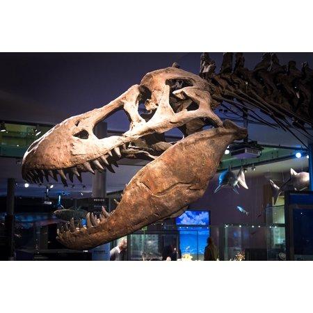 LAMINATED POSTER Fossil Bone Skeleton Tyrannosaurus T-rex Dinosaur Poster Print 24 x 36 ()
