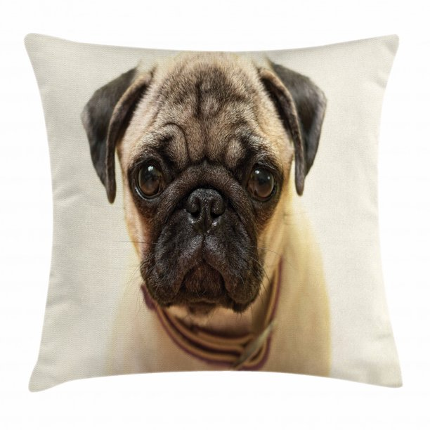Pug Throw Pillow Cushion Cover Photograph Of A Pug Pure Bred Puppy With A Loose Collar
