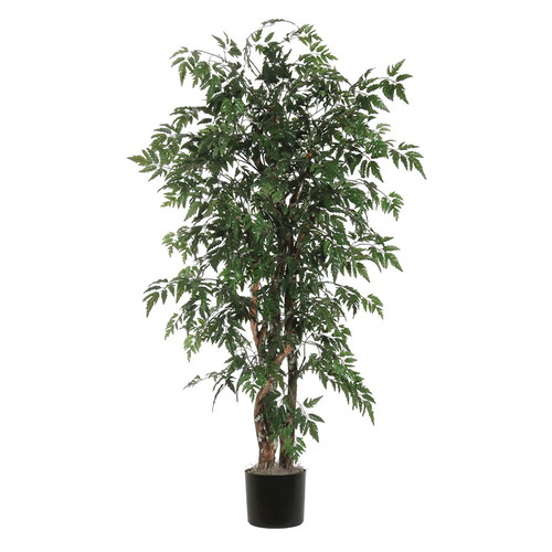 Vickerman Ridge Fir Ming Aralia Executive Tree in Pot