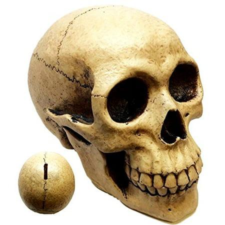 Atlantic Collectibles Large Bone Cream Homosapien Skull Money Bank Figurine