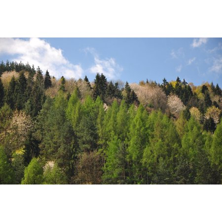 LAMINATED POSTER Tree Nature Sky Forest Blue Poster Print 24 x 36