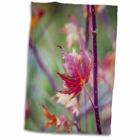 3dRose Red maple leaf on a purple branch. Autumn season - Towel, 15 by 22-inch