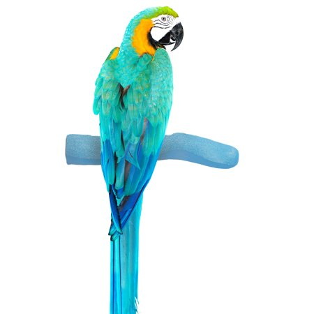 Sweet Feet and Beak Safety Pumice Perch for Birds- Helps Stimulate Leg Muscles and Promotes Healthy Feet