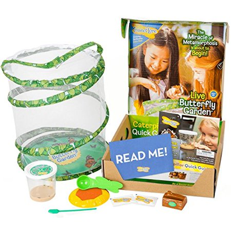 insect lore deluxe butterfly garden with live cup of caterpillars and feeding habitat kit - Live Butterfly Garden