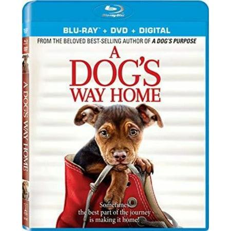 A Dog's Way Home (Blu-ray + DVD + Digital Copy) - Dog With A Blog Halloween 2017