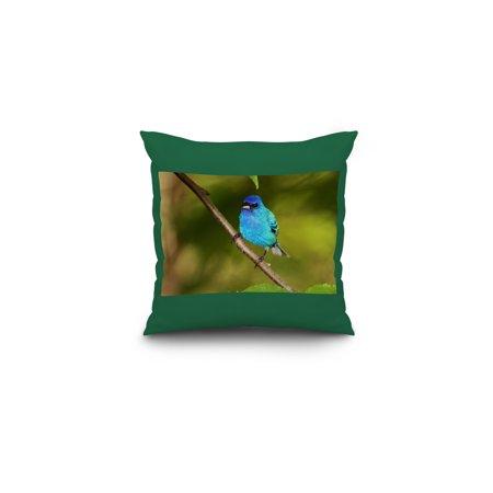 - Indigo Bunting - Lantern Press Photography (16x16 Spun Polyester Pillow, Custom Border)