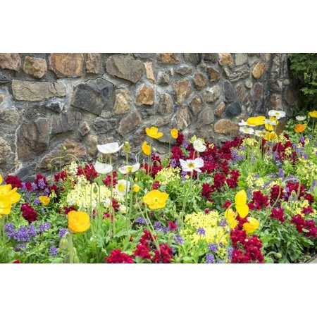 Iceland Poppy, Kennett Square, Pennsylvania, Usa Print Wall Art By Lisa S. -