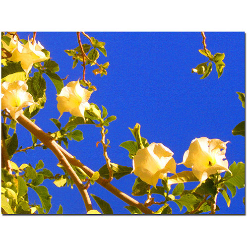 "Trademark Fine Art ""Flowering Tree"" Canvas Wall Art by Amy Vangsgard"