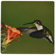 3dRose Ruby-throated Hummingbird, Claret Cup, Texas - NA02 RNU0250 - Rolf Nussbaumer, Mouse Pad, 8 by 8 inches