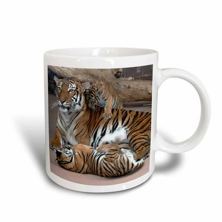 3dRose Mother Tiger with Cubs, Ceramic Mug, 11-ounce