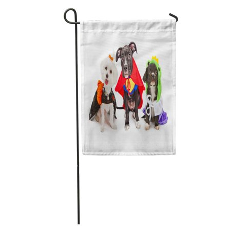 KDAGR Three Cute Little Puppy Dogs Dressed Up in Halloween Costumes Including Witch and Frog Prince Garden Flag Decorative Flag House Banner 28x40 - Puppies Dressed Up For Halloween