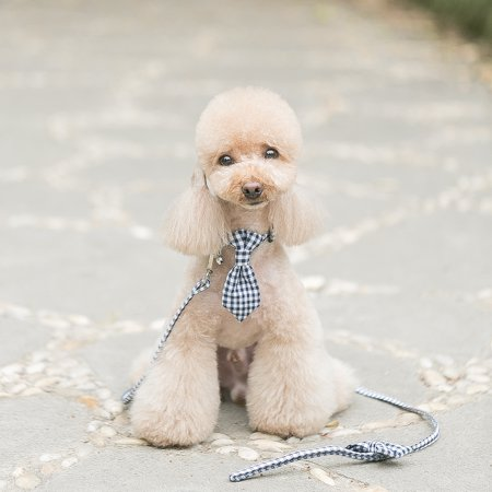 Cloth Art Cat Dog Pet Collar with Matching Leash Lovely Hauling Cable Collar Leads Collars Traction Belt Suit - image 6 of 7