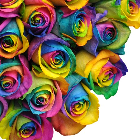 "Natural Fresh Flowers - Tinted Rainbow Roses, 20"", 50 ..."