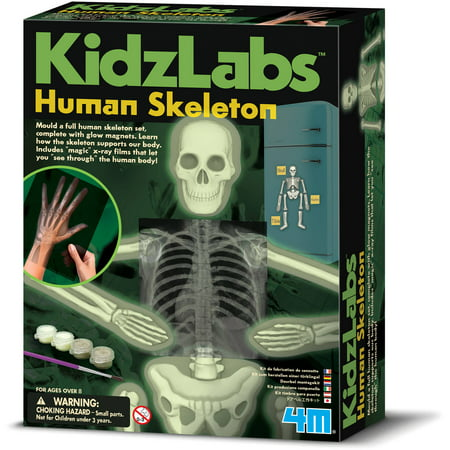 - 4M Glow Human Skeleton Science Kit