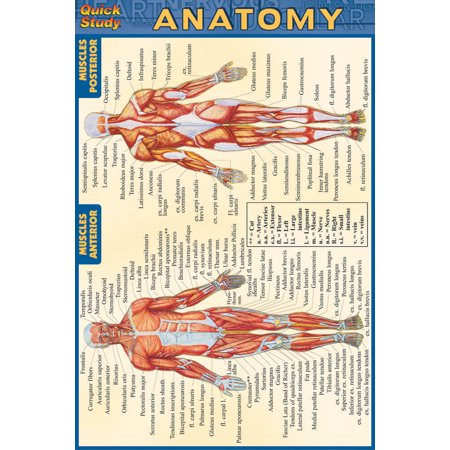 Quickstudy: Anatomy - Pocket-Sized Reference Guide (4 X 6) (Other ...