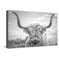 Highland Cows I Farmhouse Cattle Rustic Country Animal Photography Stretched Canvas Print Wall Art By Joe Reynolds