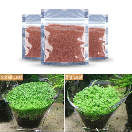 5 PCS Quick Growth High Germination Rate Water Grass Seeds Aquarium Temple Plant Seeds