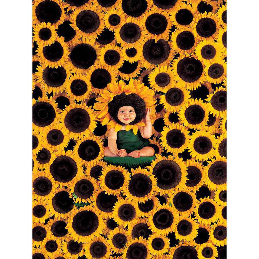 Sunflower Wall Photography Art