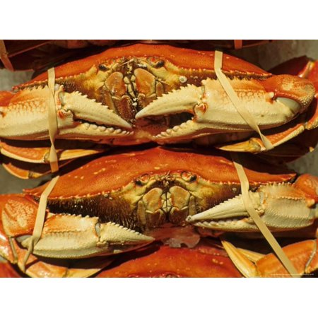 Dungeness Crab at Pike Place Public Market, Seattle, Washington State, USA Print Wall Art By David Barnes