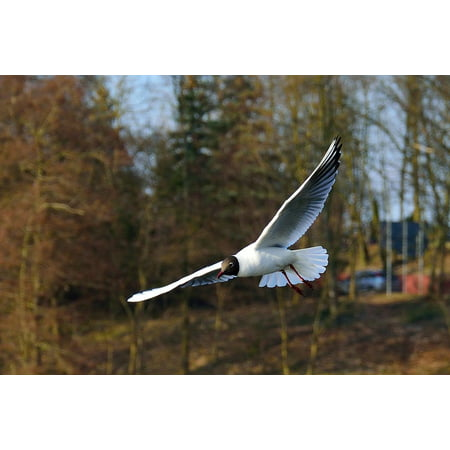 Canvas Print Pen Nature Flight Animals Seagull Sky Wings Bird Stretched Canvas 10 x 14