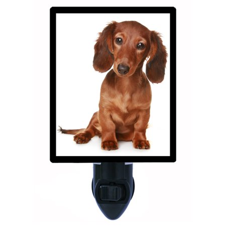 Night Light, Photo Night Light, Dog Night Light, Long Haired Dachshund Puppy plus FREE Switchable Insert Dog Breed Night Light