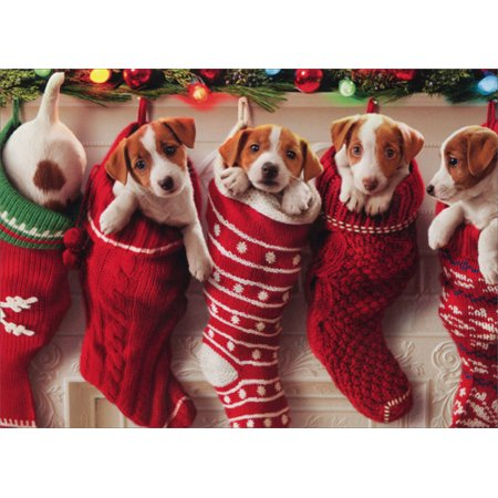 Avanti Press Puppies Hanging In Christmas Stocking Box of 10 Funny / Humorous Dog Christmas -