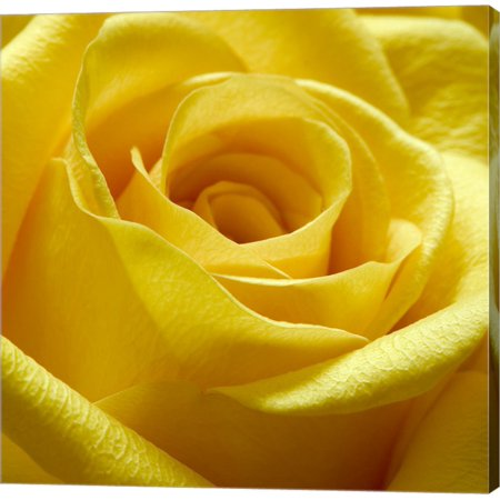 Great Art Now Yellow Rose by PhotoINC Studio Canvas Wall Art ()