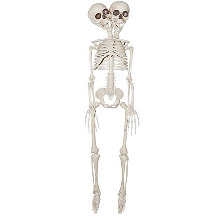 2-Headed Plastic Skeleton Prop 20in, Siamese Twins](Small Plastic Skeletons)