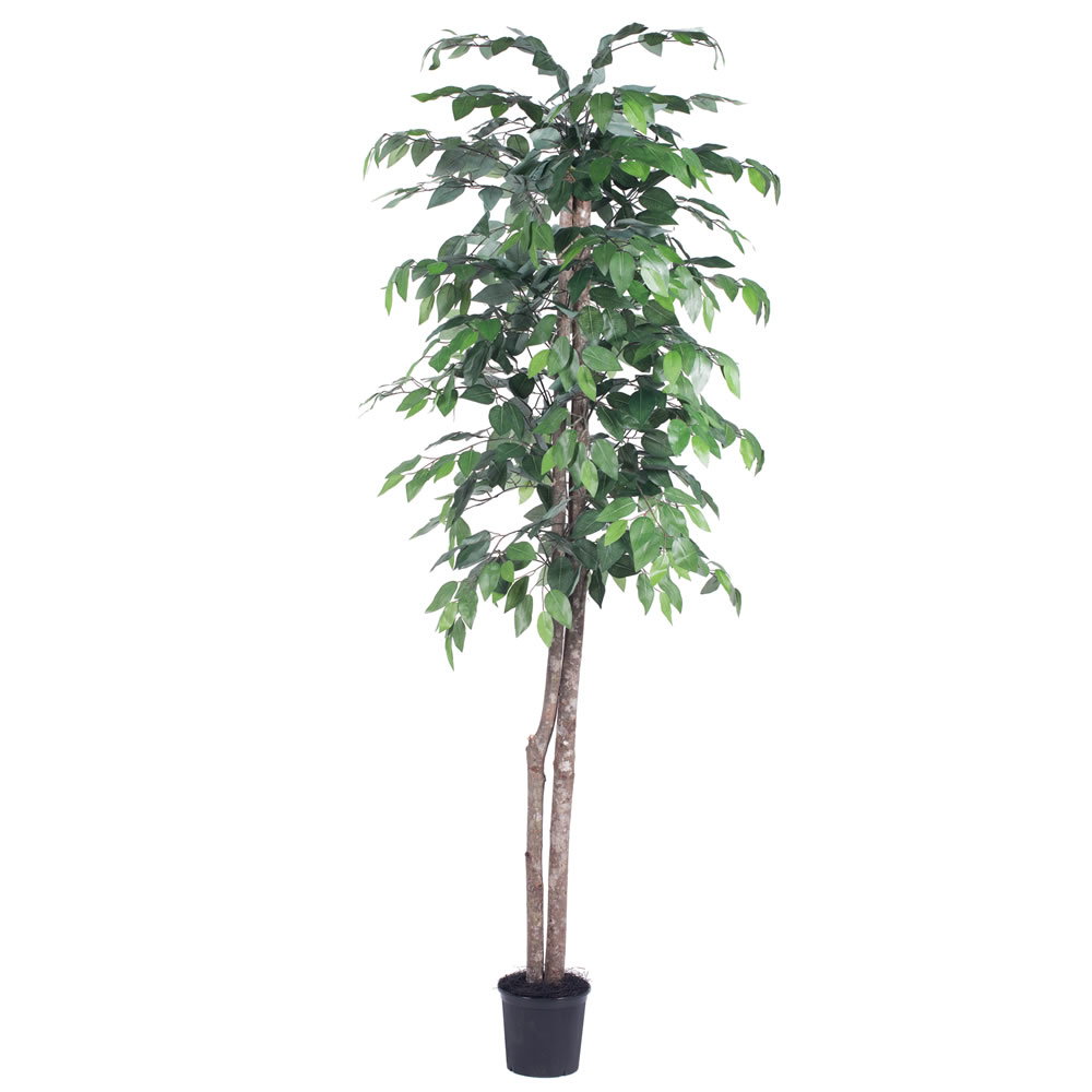 Vickerman 6' Artificial Ficus Tree in Black Pot