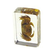 Ed Speldy East PW109 Real Bug Paperweight Regular-small-Crab
