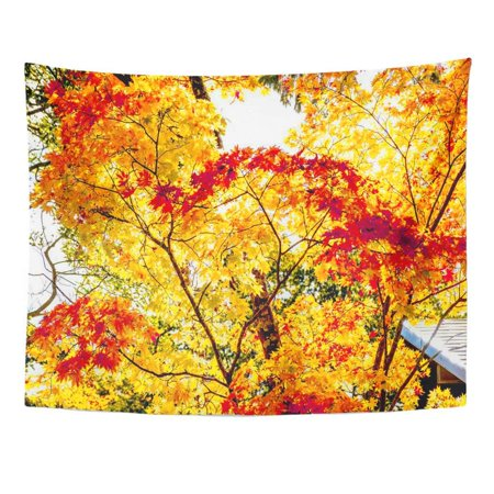 ZEALGNED Colorful Abstract Maple Autumn Tint Tree in Forest Turn to Red Orange Yellow Season Sun Light Green Wall Art Hanging Tapestry Home Decor for Living Room Bedroom Dorm 51x60 (Maple Tree That Turns Bright Red In Fall)