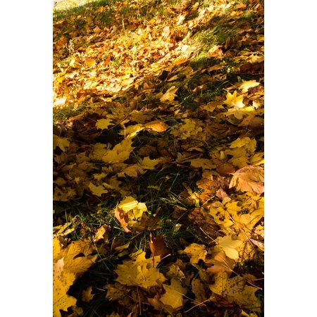 - LAMINATED POSTER Leaves Autumn Gold Yellow Fall Foliage Colours Poster Print 24 x 36