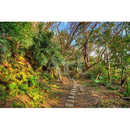 Hiking Trail the Jungle of Okinawa, Japan. Print Wall Art By