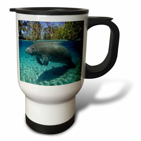 Crystal River Travel Rod - 3dRose Florida manatee, Trichechus manatus latirostrus, Crystal River, Florida, USA - Travel Mug, 14-ounce, Stainless Steel