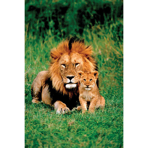 Lion And Baby Photography Art