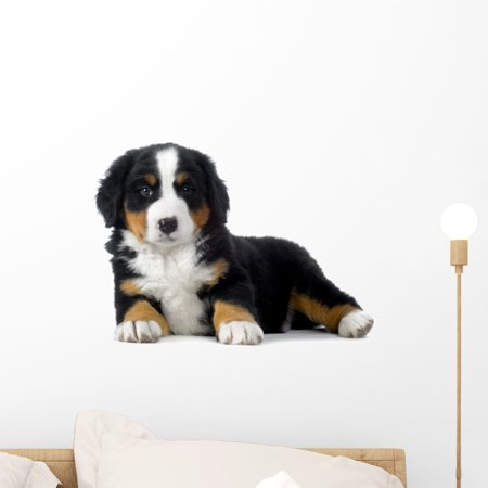 Puppy Bernese Mountain Dog Wall Decal by Wallmonkeys Peel and Stick Graphic (18 in W x 12 in H) - Bernese Mountain Dog Sticker