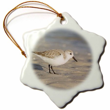 3dRose Florida, Ft. Myers Beach, Sanderling bird - US10 RTI0064 - Rob Tilley, Snowflake Ornament, Porcelain, 3-inch - Myers Christmas Catalogue
