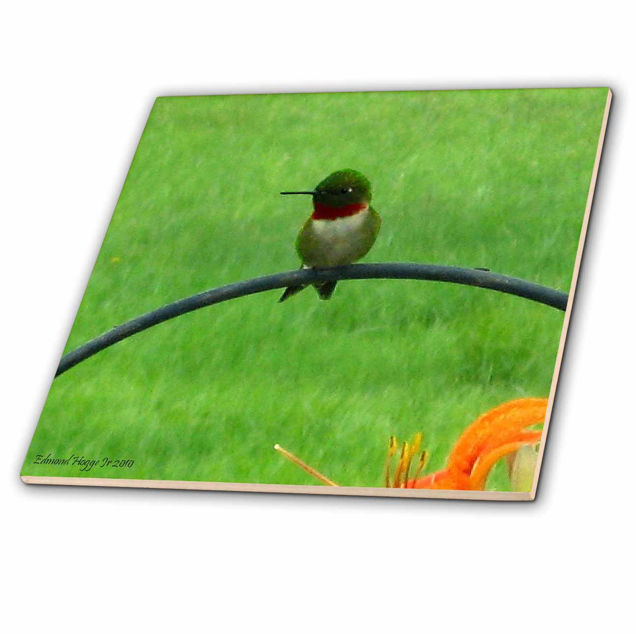 3dRose Male Hummingbird - Ceramic Tile, 6-inch