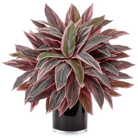 Caladium in Black Glossy Planter (Caladium Plant)