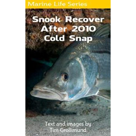 Snook Recover After 2010 Cold Snap - (Coldsnap Foil)
