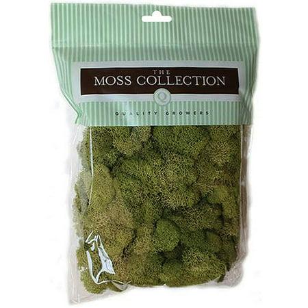 Preserved Moss, 108.5 cu in