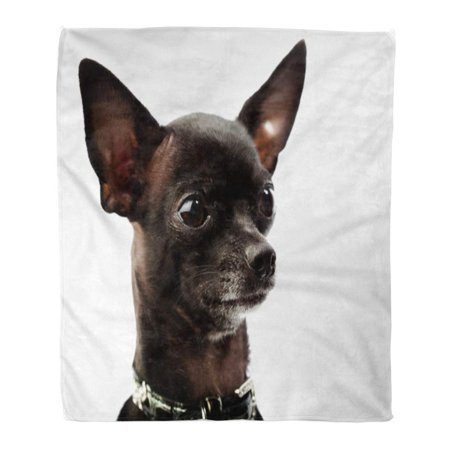 SIDONKU Throw Blanket Warm Cozy Print Flannel Brown Black Chihuahua Head Adorable Comfortable Soft for Bed Sofa and Couch 58x80 Inches