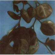 Third and Wall TAWPMAC104 Eucalyptus I Poster Print by Julianne Marcoux -24 x 24